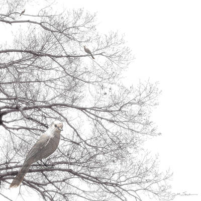Photograph - Dreamy Black And White Bird In Bare Tree Branches by Julie Magers Soulen