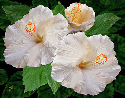 Dreamy Blooms - White Hibiscus Art Print