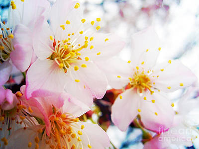 Photograph - Dreamy Blossom by Nina Ficur Feenan