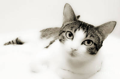 Andee Design Cat Eyes Photograph - Dreamy Cat 2 by Andee Design