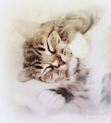 Painting - Dreamy Cat by Diana Besser