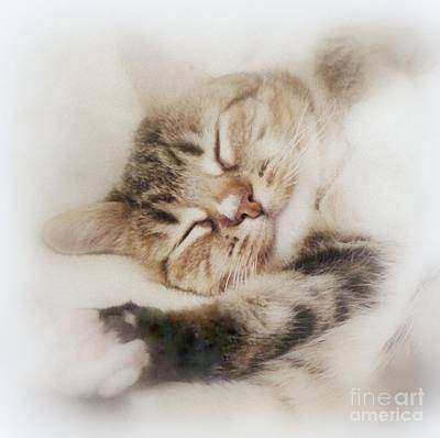 Painting - Dreamy Cat Sleeps by Diana Besser