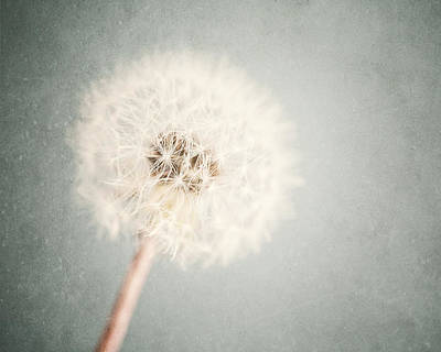 Dreamy Dandelion In Pastel Blue And Cream  Art Print by Lisa Russo