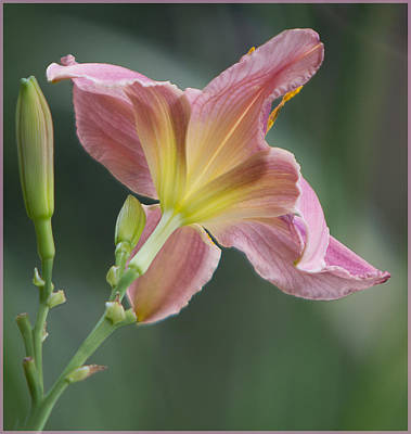 Art Print featuring the photograph Dreamy Daylily by Patti Deters
