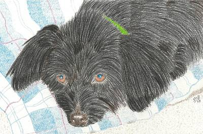 Drawing - Dreamy Della - Pencil by Sheila Byers