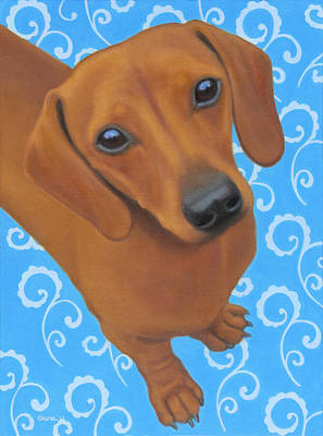 Dreamy Doxie Original