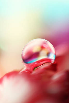Photograph - Dreamy Droplet by Sharon Johnstone