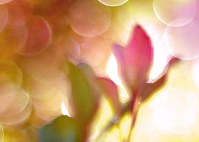 Surreal Digital Art Photograph - Dreamy Ethereal Pink Tulip Bokeh Circles by Kathy Fornal
