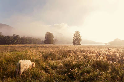 Photograph - Dreamy Fields. The Trossachs. Scotland by Jenny Rainbow