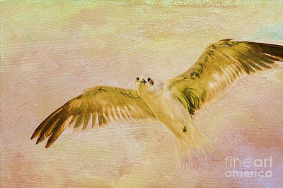 Flying Seagull Photograph - Dreamy Flight by Deborah Benoit