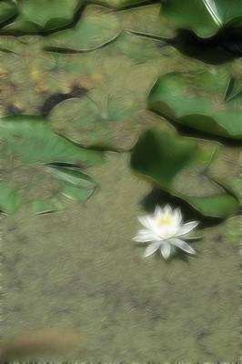 Photograph - Dreamy Gardens 3 by Rhonda Barrett