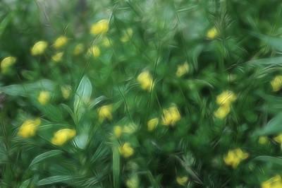 Photograph - Dreamy Gardens 9 by Rhonda Barrett