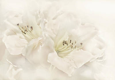 Photograph - Dreamy Ivory White Azalea Flowers by Jennie Marie Schell