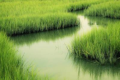 Photograph - Dreamy Marshland by Marilyn Hunt