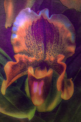 Digital Art - Dreamy Orchid by Jill Balsam