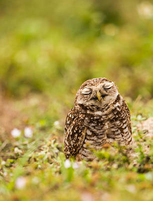 Photograph - Dreamy Owl by Andres Leon