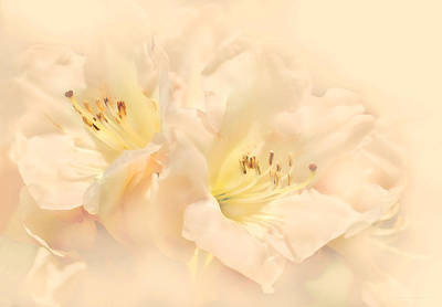 Dreamy Peach Azalea Flowers Art Print by Jennie Marie Schell