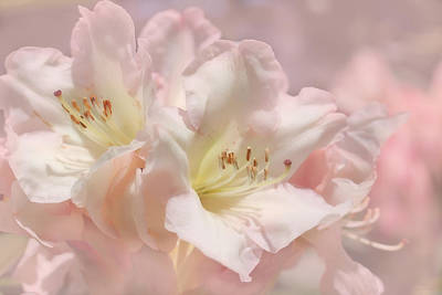 Photograph - Dreamy Pink Azalea Flowers by Jennie Marie Schell