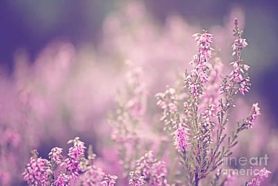 Nature Study Digital Art - Dreamy Pink Heather by Natalie Kinnear