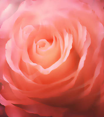 Dreamy Pink Rose Art Print