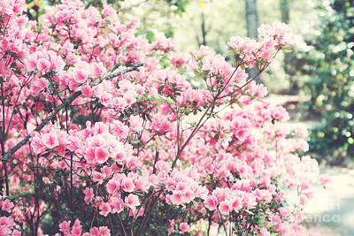 Dreamy Pink South Carolina Apple Blossom Trees - South Carolina Vintage Pastel Pink Blossoms Tree Art Print by Kathy Fornal