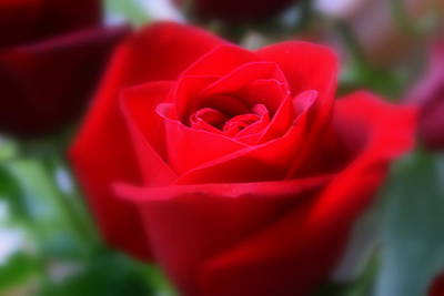 Photograph - Dreamy Red Rose Beauty by Kay Novy