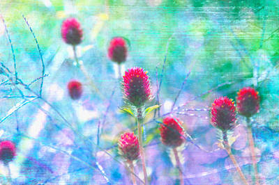 Photograph - Dreamy Red Spiky Flowers 2 by Karen Stephenson