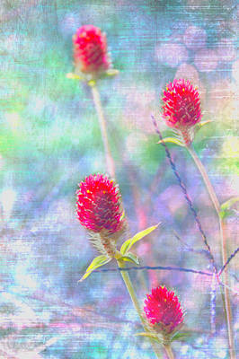 Dreamy Red Spiky Flowers Art Print by Karen Stephenson