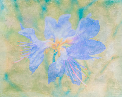 Blue Flowers Mixed Media - Dreamy Rhododendron Bloom Art by Priya Ghose