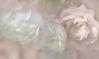Photograph - Dreamy Rose Flowers In Pink White Pastels by Jennie Marie Schell