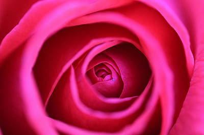 Photograph - Dreamy Rose by Lorella  Schoales
