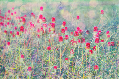 Photograph - Dreamy Spiky Flower Field by Karen Stephenson
