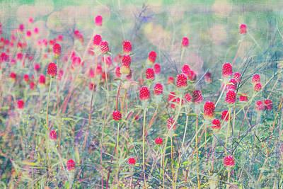 Photograph - Dreamy Spiky Flower Field by Karen Stephenson