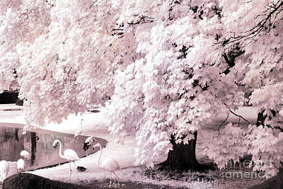 Park Scene Photograph - Dreamy Surreal Pink White Infrared Pink Flamingos In Pond - Pink Flamingos Dreamy Nature Landscape by Kathy Fornal