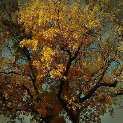 Golden Wall Art - Photograph - Dreamy by Go Inspire Beauty