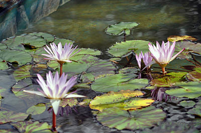 Dreamy  Water Lillies Art Print by Judith Russell-Tooth