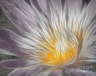 Digital Art - Dreamy Waterlily by Susan Candelario