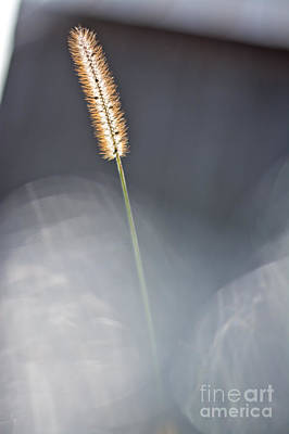 Photograph - Dreamy Weed by Cheryl Baxter