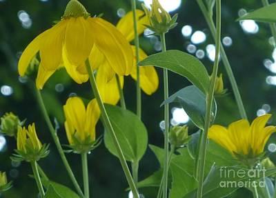 Photograph - Dreamy Yellow by Susan Garren