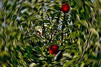 Baum Mixed Media - Drehen by Klaas Hartz