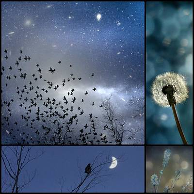 Dandelion Digital Art - Drempt In Blue by Gothicrow Images