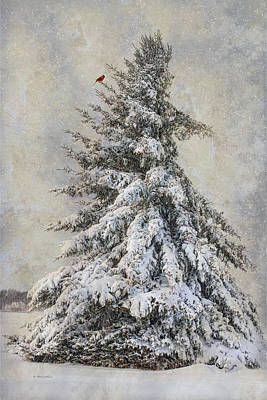 Photograph - Dressed For The Holiday by Robin-Lee Vieira