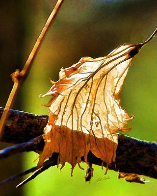 Photograph - Dried But Still Beautiful by Bill Kesler