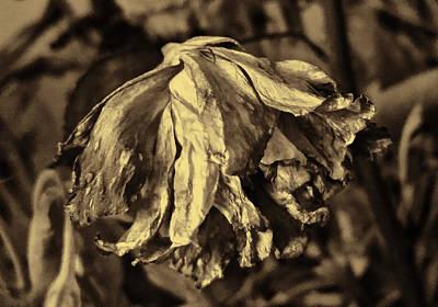 Mixed Media - Dried Flower by Pamela Walton