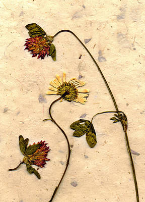 Photograph - Dried Flowerrs 1 by Matthew Pace