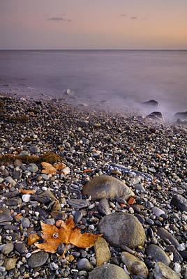 Dried Leaves Of The Sea Art Print