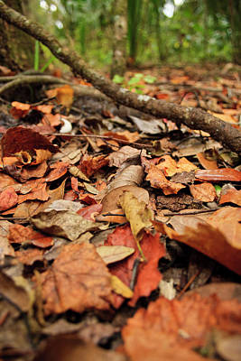 Spring Peepers Photograph - Dried Leaves On The Ground by � Marcela Montano - Vwpics