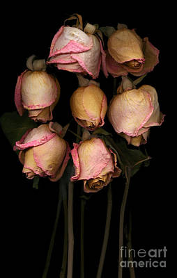 Macro Photograph - Dried Pink Roses by Oscar Gutierrez