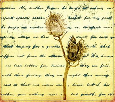 Photograph - Dried Pods Poet by Alice Gipson