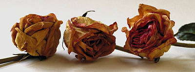 Photograph - Dried Roses by Michael Moschogianis